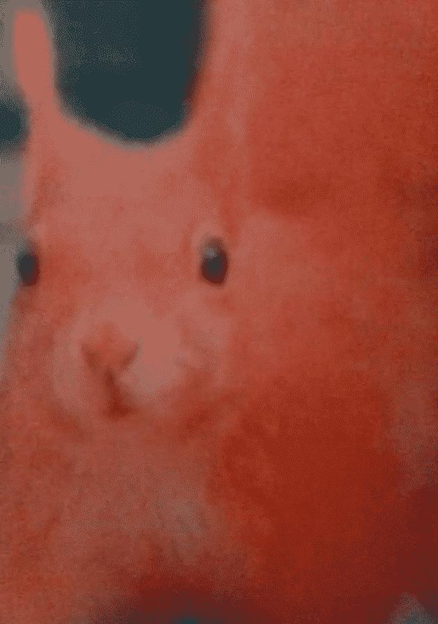 катерицата беатрис - розовата катерица Фана
